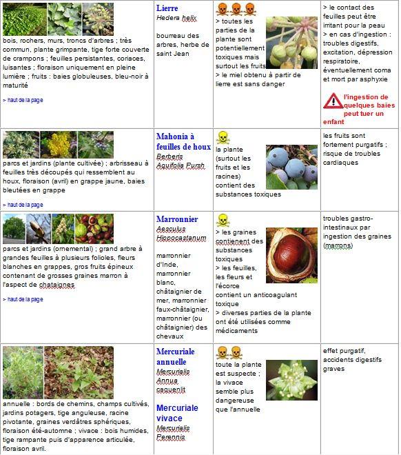 plantes13