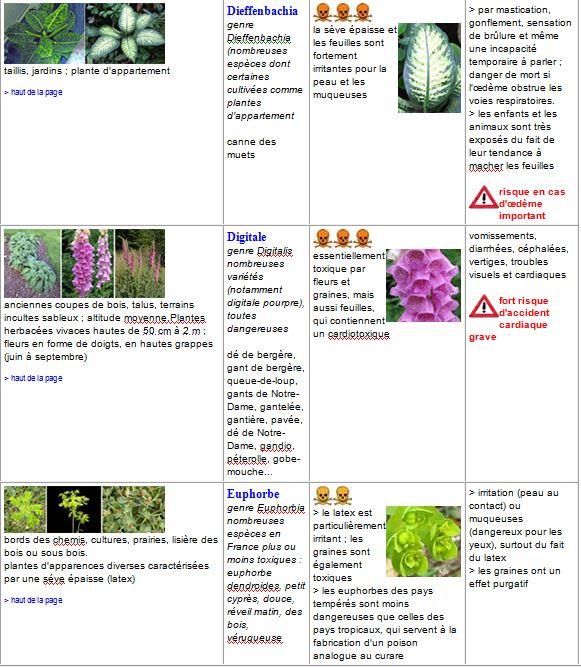 plantes7
