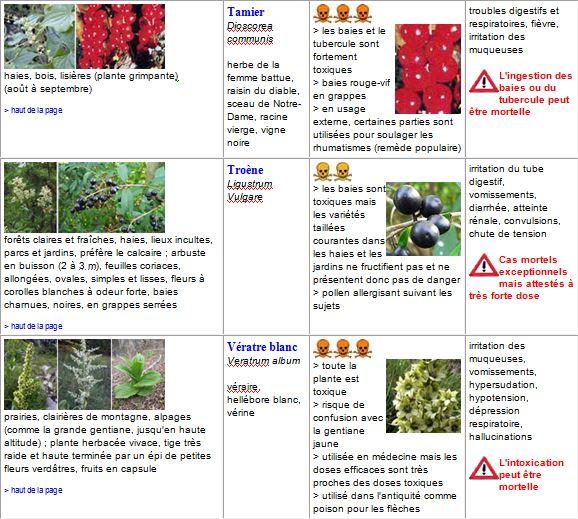 plantes19