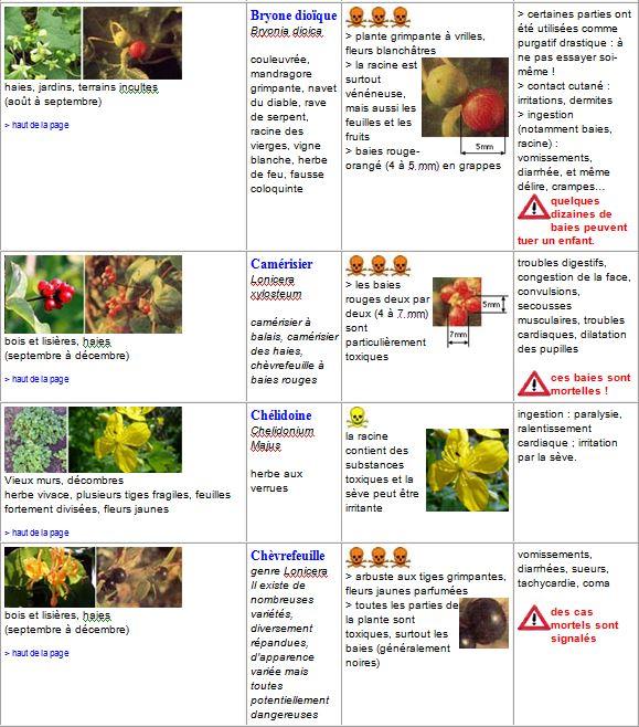 plantes3