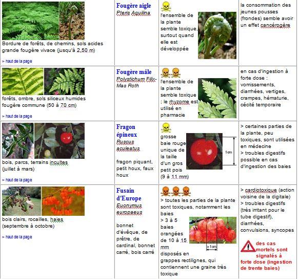 plantes8